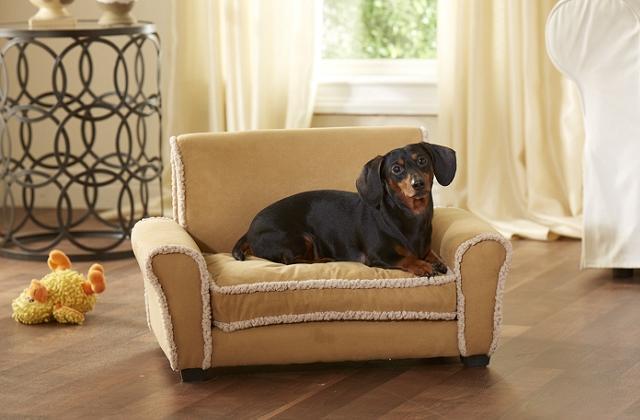 O sofá da sala para animais de estimação