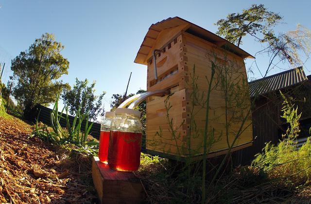 A aria que permite a extração de mel na torneira, sem perturbar as abelhas