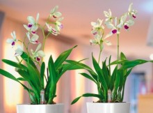 Plantas de casa decorativas e duráveis