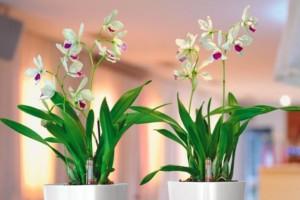 Plantas de apartamento bonitas e fáceis de cuidar