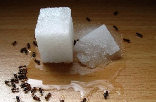 Todos os remédios eficazes contra as formigas em casa