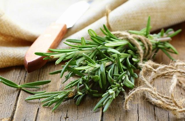 Alecrim: um excelente remédio natural para ser redescoberto