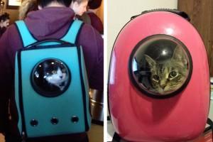 Mochila alternativa para transportar nossos gatos