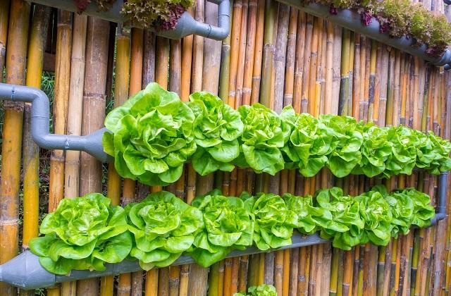 Montando um jardim em casa mesmo com pouco espaço