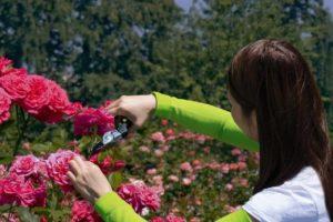 Como proteger os seus braços enquanto faz a poda no jardim