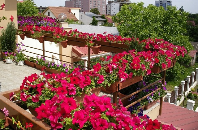 Decorar um terraço florido: dicas úteis