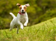 Como ter um cão tranquilo e feliz