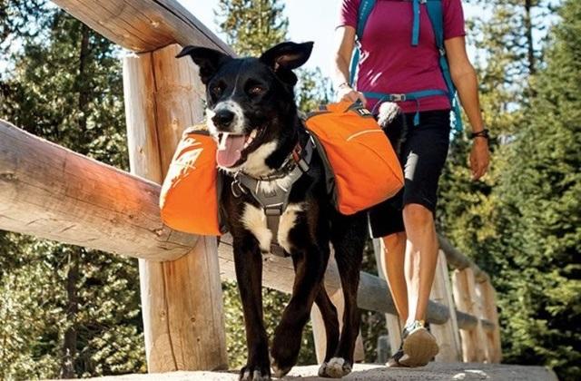 Ruffwear, bolsas para cachorros