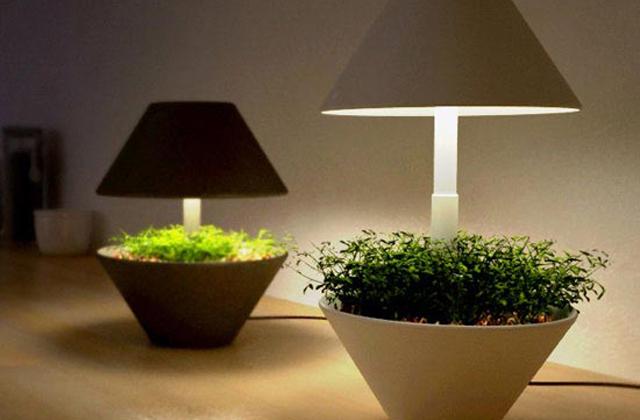 Uma luminaria de LED para as ervas aromáticas