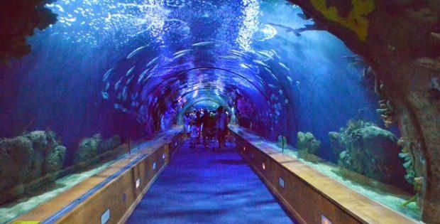 Lugares para sonhar: Os mais belos parques marinhos do mundo