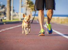 Praticando esportes na companhia de seu cão