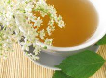 O chá branco e seus benefícios