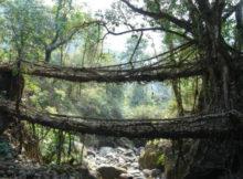 Maravilhas da natureza: As pontes de borracha