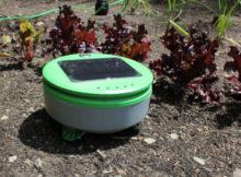 Tertill, o robô jardineiro que tira todas as ervas daninhas