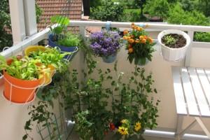 10 coisas para saber quando começar a cultivar um jardim orgânico