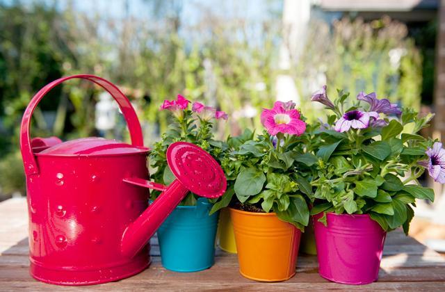 As plantas adequadas para afastar moscas e mosquitos