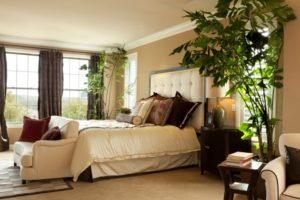 Plantas no quarto, qual escolher para respirar sempre ar puro