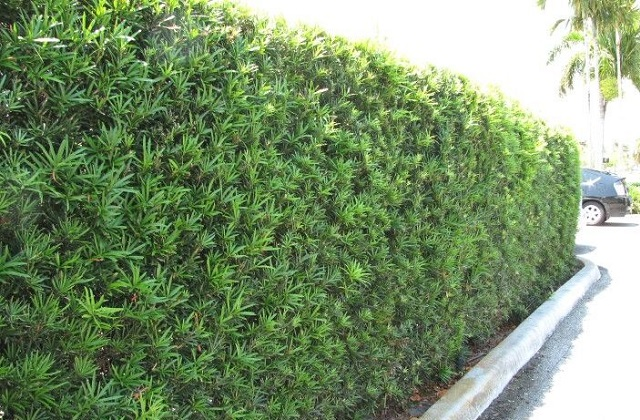 Como plantar cerca viva: dicas úteis