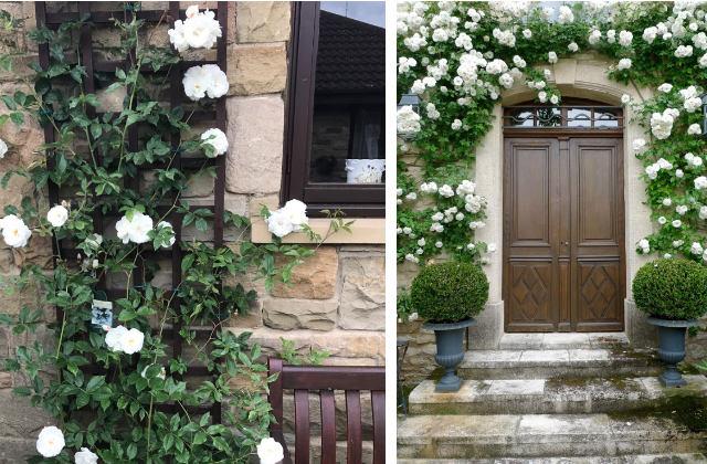 Como decorar a entrada da casa com flores trepadeiras