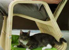 A cadeira de balanço para animais (e seus donos) dorminhocos